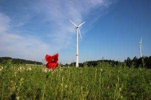 Windrad Neudorf mit Mohn_klein