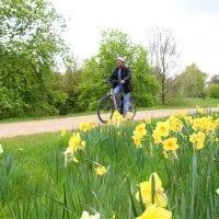 Fahrradfahrer mit Frühlingswiese