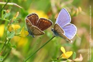 NABU Schmetterling