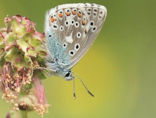 Schmetterline schützen